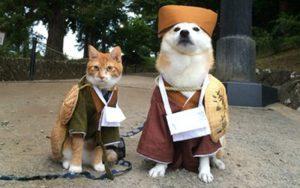 làm áo quần chó mèo bằng đồ cũ