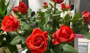 Hoa hồng hoa để bàn làm việc theo phong thủy mang lại nhiều may mắn