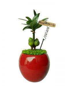 Cây tài lộc loài cây được ưa chuộng trang trí văn phòng